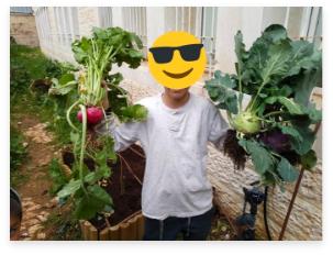 ילד מחזיק ירקות שגידל בגינת ירק בבית הספר