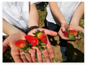 ילדים מחזיקים תותים